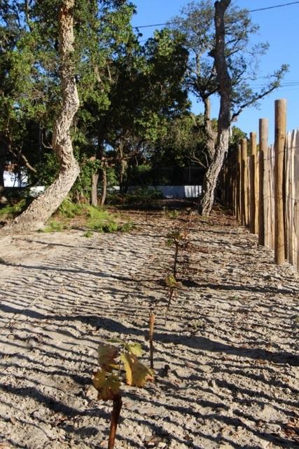 La Clé des chênes-Lardemer17_Labenne_Landes Atlantique Sud