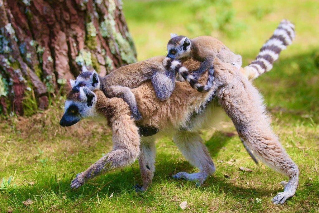 3.zoo-labenne-oti-LandesAtlantiquesud-Makicatta