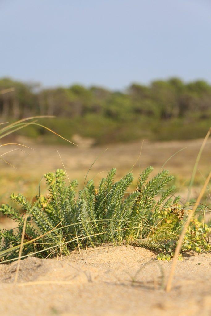 La Clé des chênes-Lardemer29_Labenne_Landes Atlantique Sud