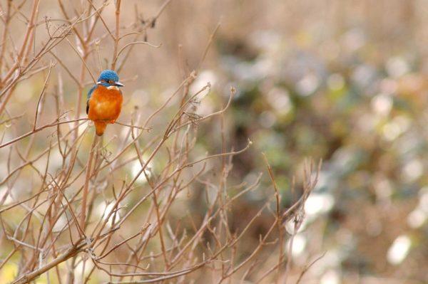«Initiation à l'Ornithologie»-Réserve naturelle du Marais d'Orx